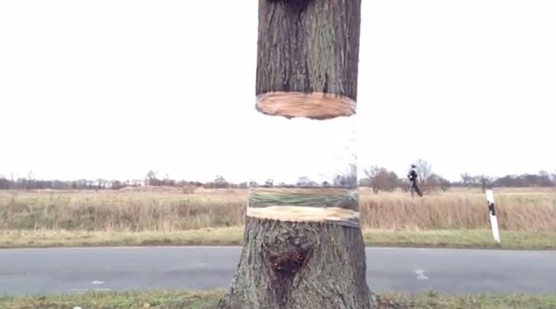 Levitating Tree - Daniel Siering and Mario Shu