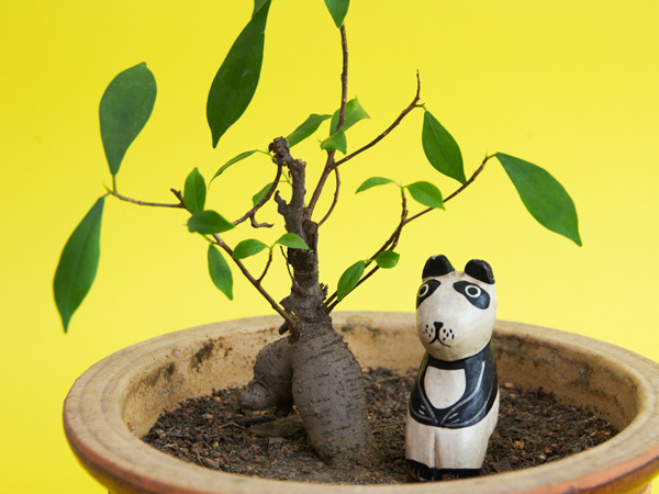 Plant with panda decoratio n - Art Direction by Driv Loo