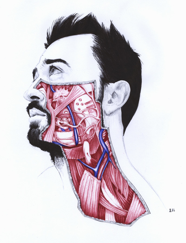 Anatomy of - Drawing by Salvatore Zanfrisco