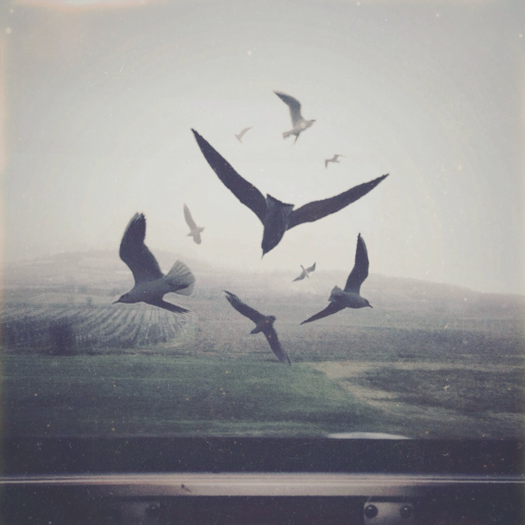 Birds - Art by Yuri Shwedoff