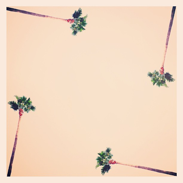 The palm tree pattern and the toasted pink sky. - iPhone photo by Tony Hammond