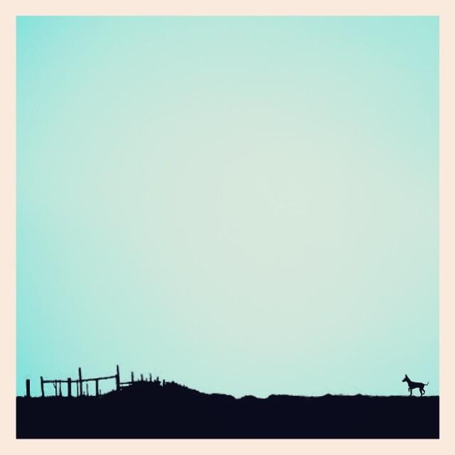 The higgledypiggledy landscape, the tiny dog and the aqua sky. - iPhone photo by Tony Hammond