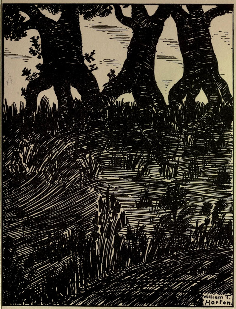Trees Walking- Illustration by William Thomas Horton