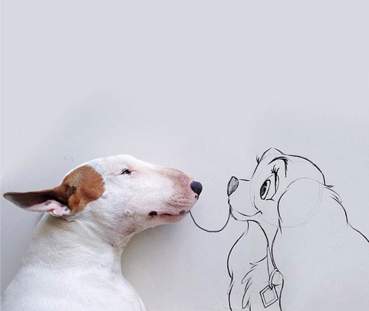 Lady and the Tramp - Bull Terrier - Photo by Rafael Mantesso
