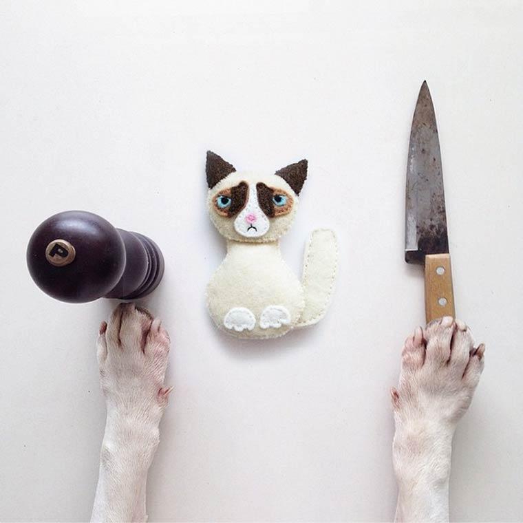 Grumpy Cat - Bull Terrier - Photo by Rafael Mantesso