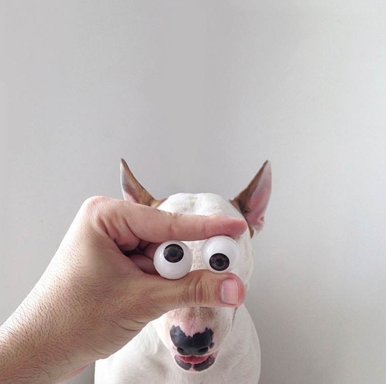 Googly Eyes - Bull Terrier - Photo by Rafael Mantesso