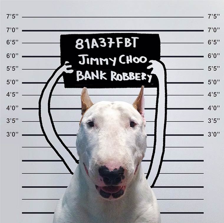 Bull Terrier - Photo by Rafael Mantesso