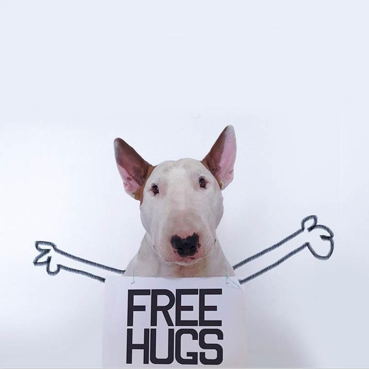 Free Hugs - Bull Terrier - Photo by Rafael Mantesso