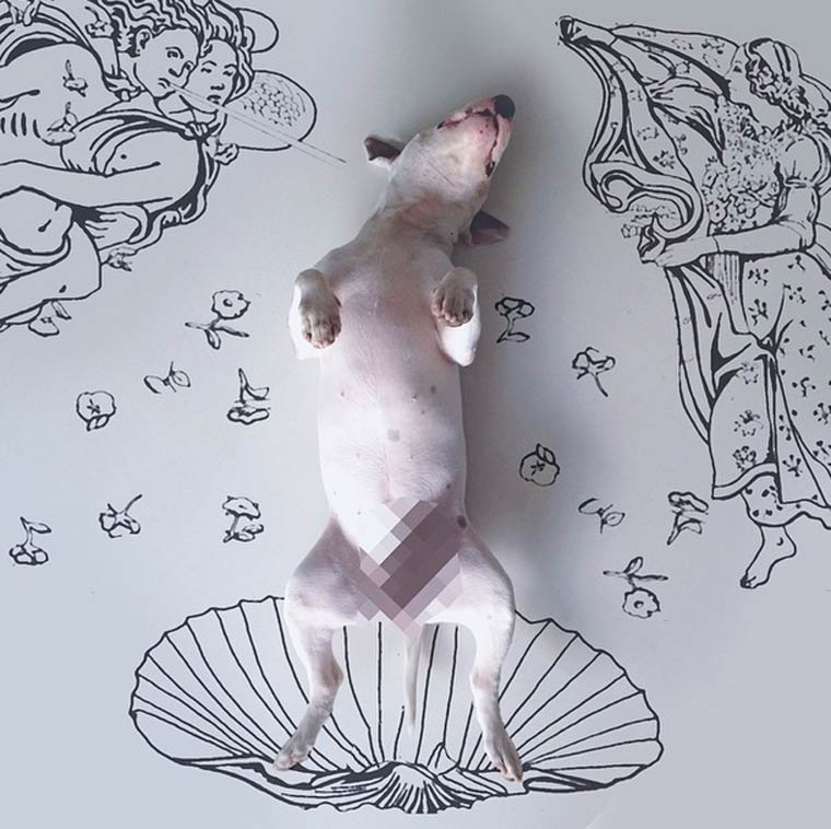 Birth of Venus - Bull Terrier - Photo by Rafael Mantesso
