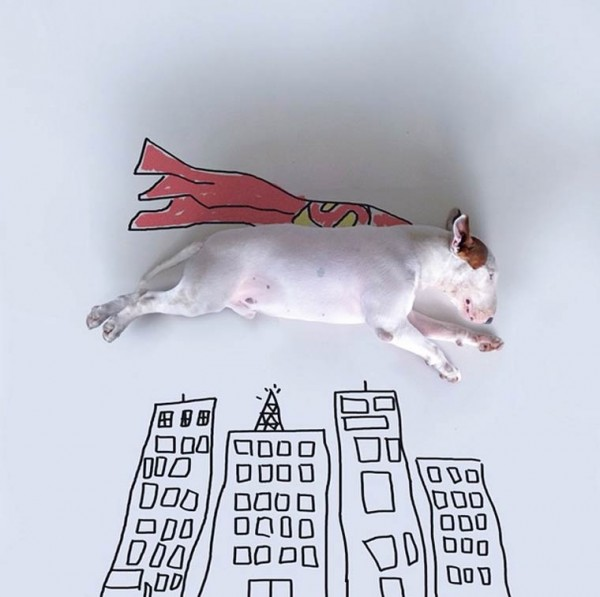 Superhero - Bull Terrier - Photo by Rafael Mantesso