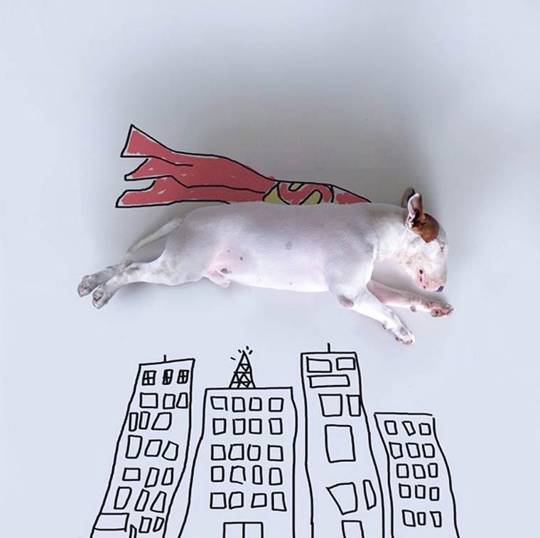 Superhero - Bull Terrier - Photo by Rafael Mantesso