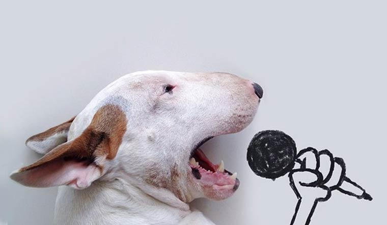 Singing - Bull Terrier - Photo by Rafael Mantesso