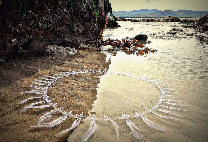 untitled feather ring - Land Art by Gerry Barry