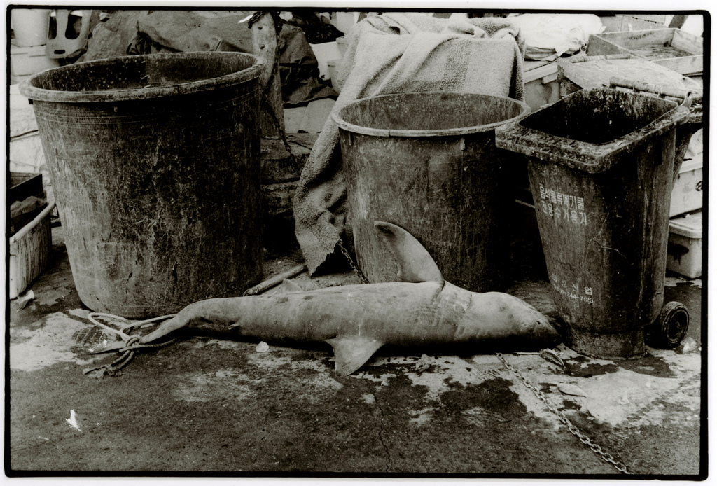 Shark and Buckets - Photo by Junku Nishimura