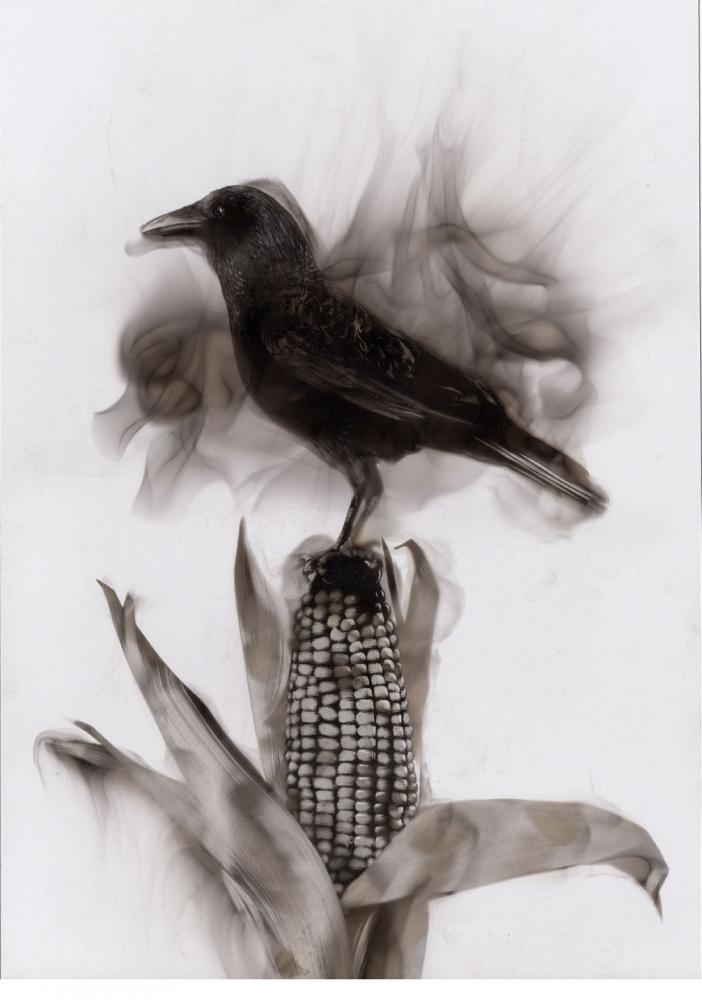 Ornithocides - Fire Painting - Art by Steven Spazuk